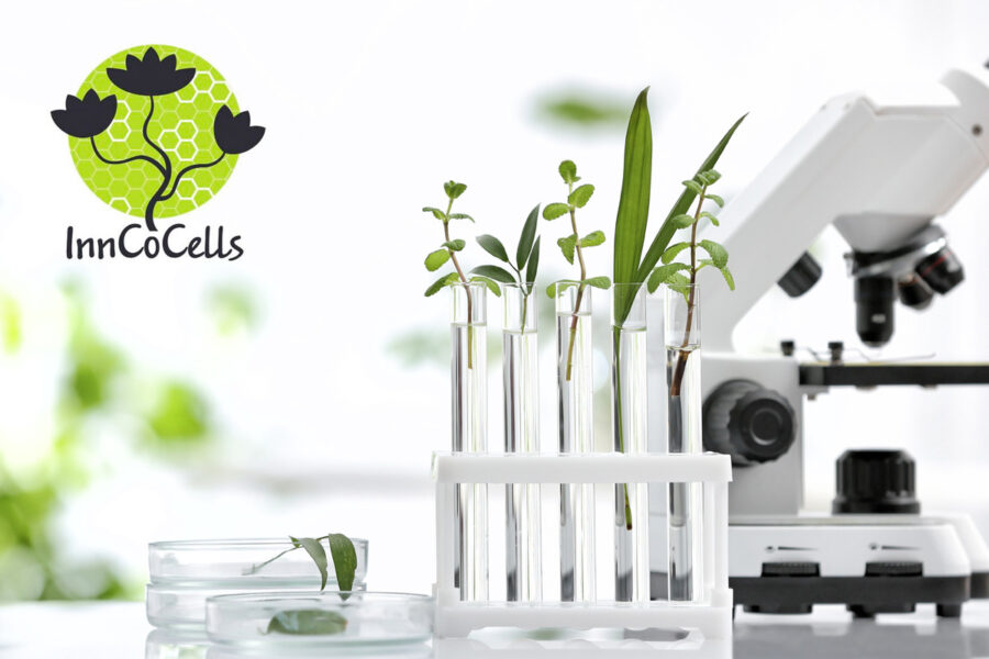 InnCoCells – an EU collaborative research project with Ecomaat's participation